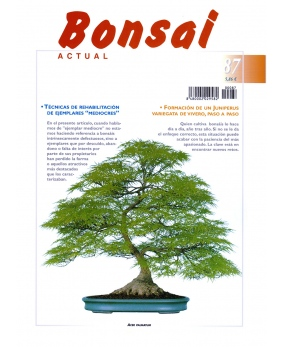 Bonsai Actual Nº 87