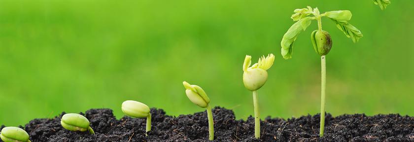 Como hacer y cultivar un bonsái desde semilla